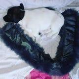 Elle dort si tranquille dans mon lit ! photographie stock libre de droits