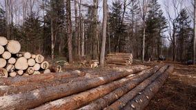 Elled在一种采伐的剧情堆积的树干 股票录像