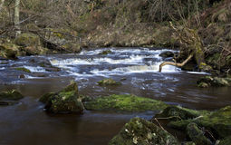 Eller Beck tumbling through Thomason Woods, Beck Hole Royalty Free Stock Photo