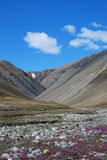 Ellesmere Island Stream Royalty Free Stock Images