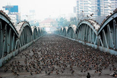 Ellis brige: Erfenisstructuur, Ahmedabad, India Royalty-vrije Stock Afbeelding