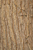 Elm bark Stock Image