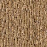 Elm Bark. Seamless Texture. Stock Photo