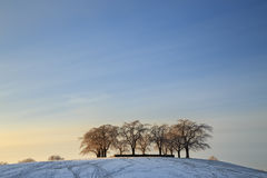 Elm grove at Woodland Cemetery in Stockholm. Sweden during winter Royalty Free Stock Images