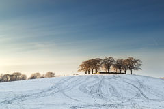 Elm grove at Woodland Cemetery in Stockholm, Sweden. During winter Royalty Free Stock Image