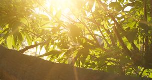 Elm in sunny day. Natural background with elm branches and young bright leaves in front of day sun flickering through. stock video footage