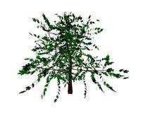 Elm tree Royalty Free Stock Photo