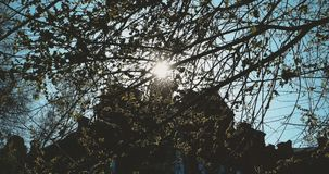Elm tree in sunny day of spring. Nature background with elm branches in front of flickering day sun with old building on. Background, vintage color grading stock footage