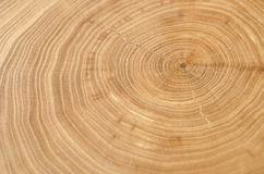 Elm tree trunk showing growth rings. Royalty Free Stock Photography