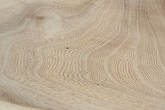 Elm tree wood texture. Fresh elm tree wood texture with veins royalty free stock photo
