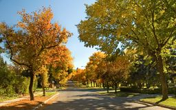 Elm trees in autumn 3. Leaves changing color and falling from elm trees in city royalty free stock image