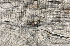 Elm wood plank surface. Real texture for your design royalty free stock photo