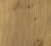 Elm Wood Texture Royalty Free Stock Photography