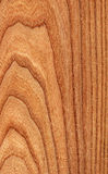 Elm (wood texture). Texture of elm (high-detailed wood texture series stock photography