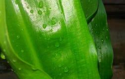 Elment de l'eau de beauté Image stock