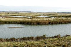 Elmley RSPB Reserve, Kent Stock Photos