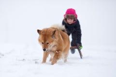 Elo狗拉与一个女孩的一个雪橇 库存图片