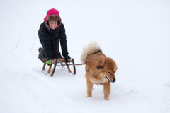 Elo Hund zieht einen Pferdeschlitten mit einem Mädchen Stockbilder