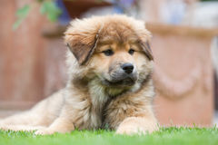 Elo puppy lies in the garden Royalty Free Stock Photo