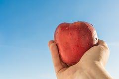 Elongated ręka mężczyzna trzyma czerwonego jabłka przeciw niebu Obrazy Stock