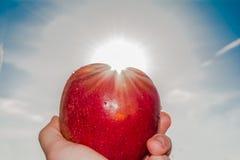 Elongated ręka mężczyzna trzyma czerwonego jabłka przeciw słońcu i niebieskiemu niebu Obrazy Royalty Free