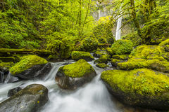 Elowahl Falls, Columbia Gorge Stock Photography