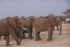 Elphants Foto de Stock Royalty Free