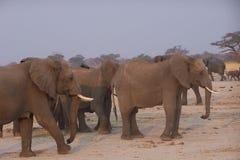Elphants Fotografia Stock Libera da Diritti