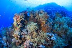 Elphinstone Reef Royalty Free Stock Photo