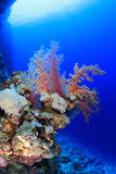 Elphinstone Reef Royalty Free Stock Images