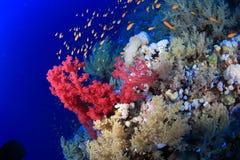 Elphinstone Reef Stock Photos