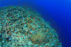 Elphinstone Reef Stock Image