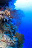 Elphinstone Reef Stock Images