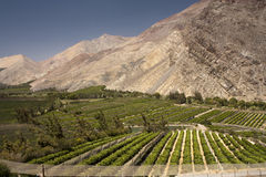 Elqui valley royalty free stock photography