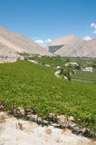Elqui valley, Chile Stock Images