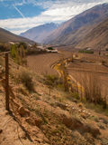 Elqui Valley Portrait Royalty Free Stock Images