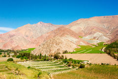 Elqui Valley Vines. The contrast between the dry mountains lining the Elqui Valley and the verdant green vineyards is striking in this photo Royalty Free Stock Photo