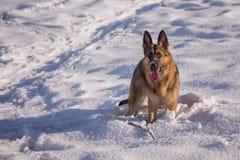 Elsässischer Hund auf dem gefrorenen See Stockfotografie