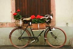 Elsässisches Fahrrad in den Blumen Stockbilder