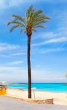 Els Pujols formentera beach with turquoise water. And palm trees in balearic islands Stock Images