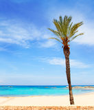 Els Pujols formentera beach with turquoise water. And palm trees in balearic islands Stock Photography