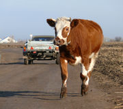 Elsanta Ryssland - Oktober 18, 2008: vägen till och med byn Royaltyfria Bilder