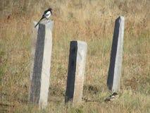 Elster auf Obelisken Lizenzfreie Stockbilder