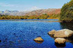 Elterwater. Autumn on a windy Elterwater Stock Image
