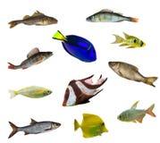 elva isolerade fiskar Arkivbild