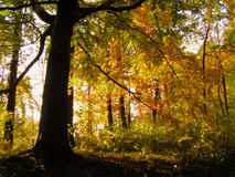 Elven forest. Photos are taken in the park of the small czech town Letohrad Stock Photo