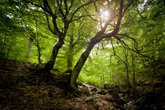 Elven forest Stock Photography