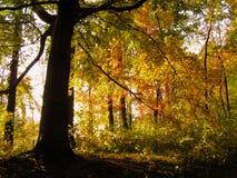 elven skogen Arkivfoto