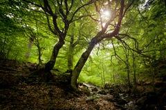elven skogen Arkivbild