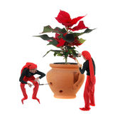 Elves and a christmas flower Royalty Free Stock Images